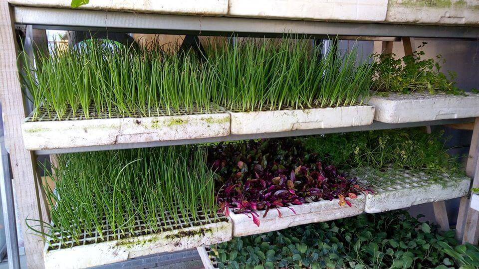 Horticolas Agricasa
